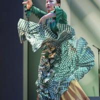2013年フラメンコ発表会③(Alegrías, Tango)のサムネイル