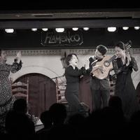 2016年7月 Finale (Canasta-Xeres Flamenco Vivo)のサムネイル